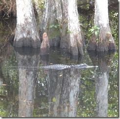 Everglades, Florida (13)