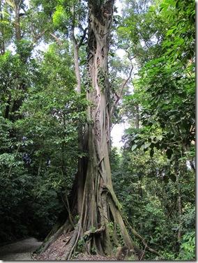 Palenque 036