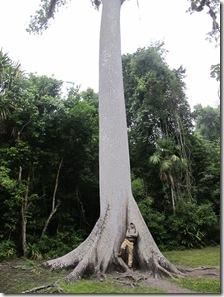 Tikal 002