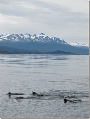 Beagle Channel 037