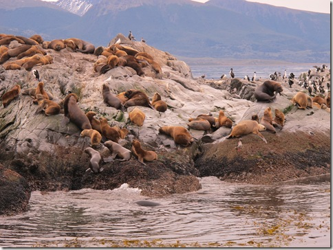 Beagle Channel 046