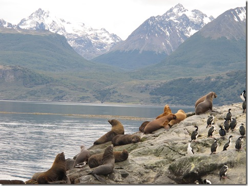 Beagle Channel 048
