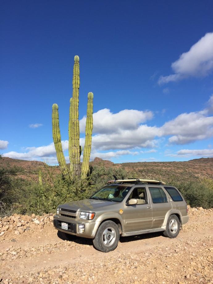 Baja Cactus QX4