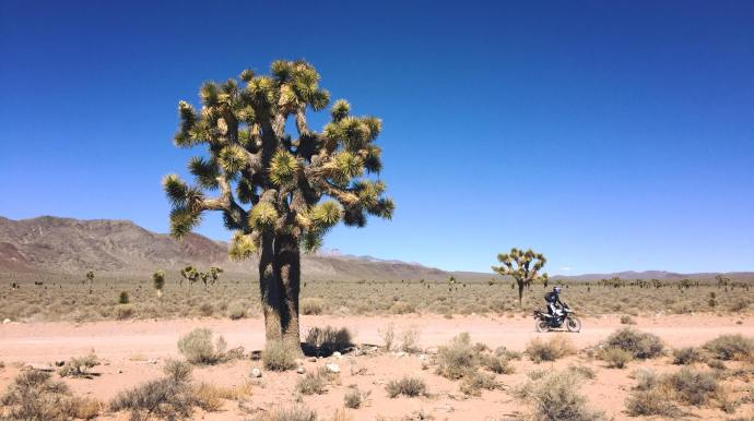march-death-valley-tree-riding